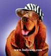 Snoop Dogg (Dog)